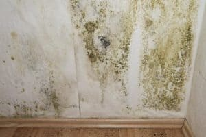 How Can I Detect Mold?