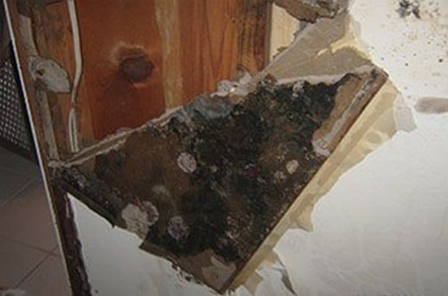 Top 40 Articles On Mold & Indoor Air Quality!