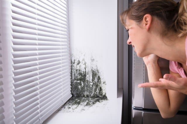 What Happens During A Professional Mold Inspection!