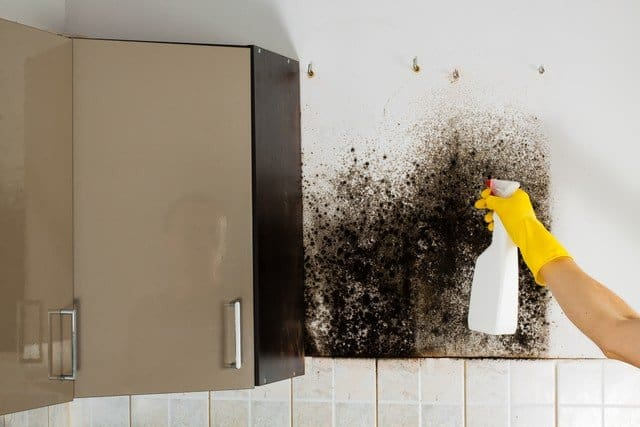 5 Actions You Should Not Take If You Find Mold! - This article has three goals. First, we explain why you should never disturb mold. Second, we list and explain the top 5 actions you should never take if you find mold. Finally, we will help you determine if you have a mold problem by identifying the top 7 areas in your home that you will likely find it. Suspect that you have mold? Call our mold hotline, 703-897-7121. Peace of Mind, just a phone call away! :-)