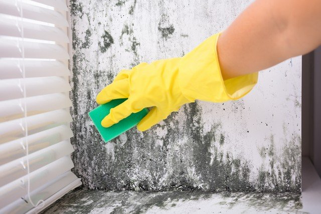 Found Mold? Never Do This!