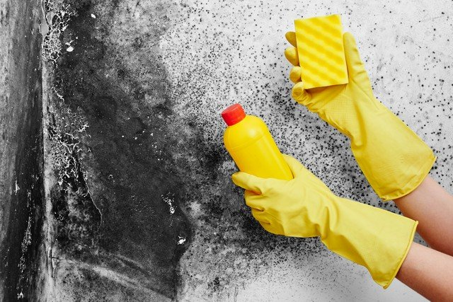 Two Key Reasons You Should Never Disturb Mold!
