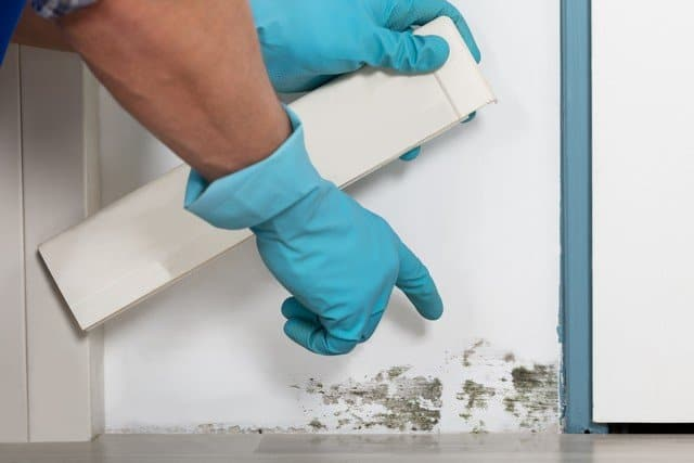 10 Tips To Prevent Mold!