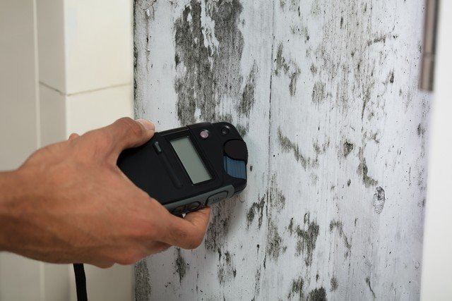 Got Mold Questions?