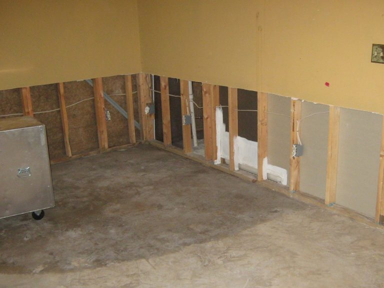 valor mold basement mold remediation process