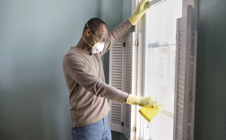 The Benefits of Professional Mold Testing