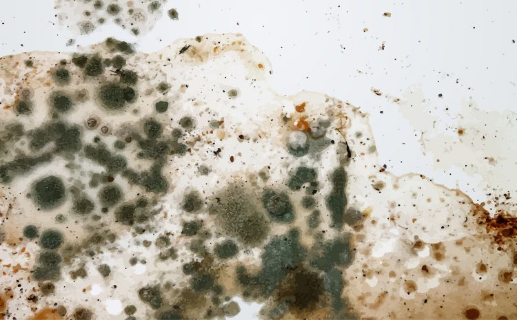 Mold On Drywall: Everything You Need to Know