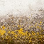 yellow-household-mold-problem-dc-valor-mold-removal