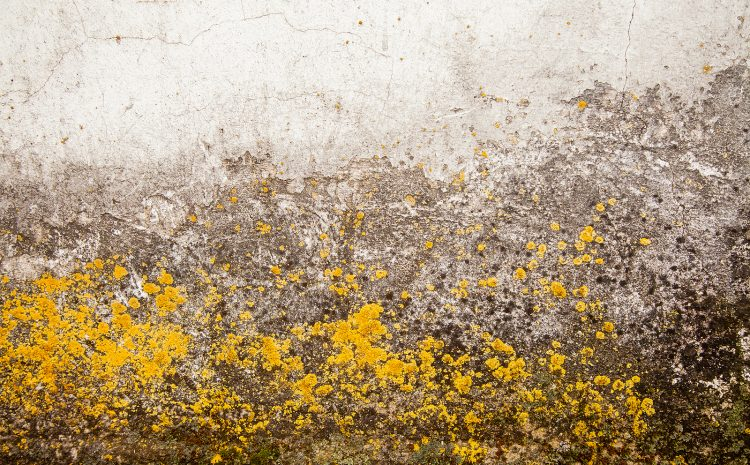 How common is it to get mold in your home?