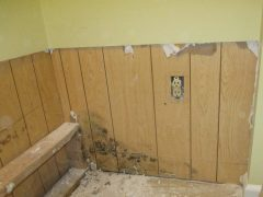 Mold Under Drywall
