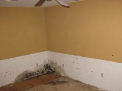 2. Valor Mold Removal - Mold Remediation In Basement - Removed Wall Paneling - Clifton VA (During)