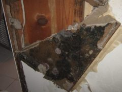 3. Valor Mold Removal - Mold Remediation In Basement- Arlington VA (During)
