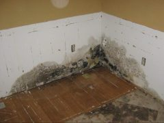 3. Valor Mold Removal - Mold Remediation In Basement - Closeup Of Mold - Clifton VA (During)