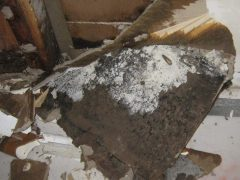 5. Valor Mold Removal - Mold Remediation In Basement- Arlington VA (During)